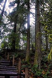 Oxbow Park staircase with trees
