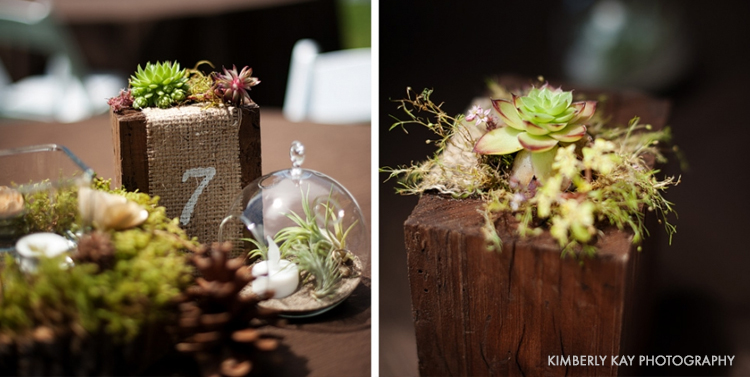 smal succulent decorations